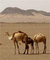 Углубились в Сахару на 500 км: аппараты ещё тянут--и это главное!