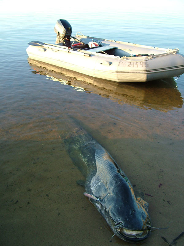 Рыбалка видео.  Главной целью путешествия на Каму стал сом, причем рыбаки настроены поймать не маленьких сомиков...