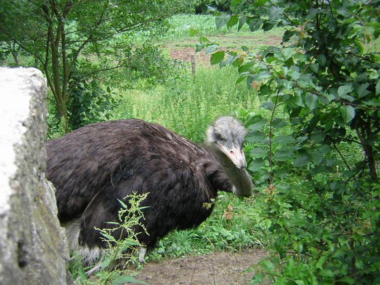 VVV.RU Фотографии Животные Большая птица.