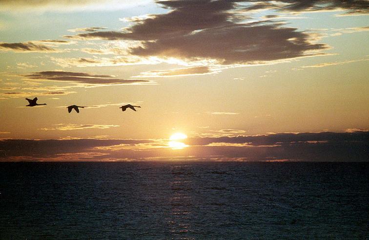 ...посмотреть в разделах: птицы беларуси фото и фото птиц