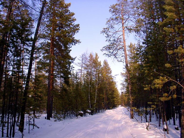 Архангельский лес Знак качества леспрома